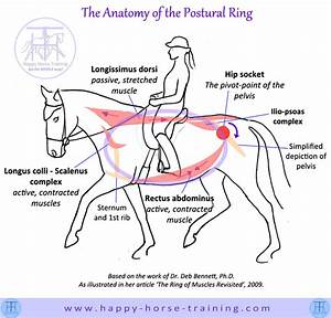 The Anatomy Of The Postural Ring
