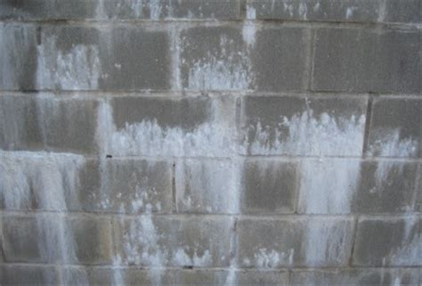 White Mold In Basement Types, Health Risks, Removal