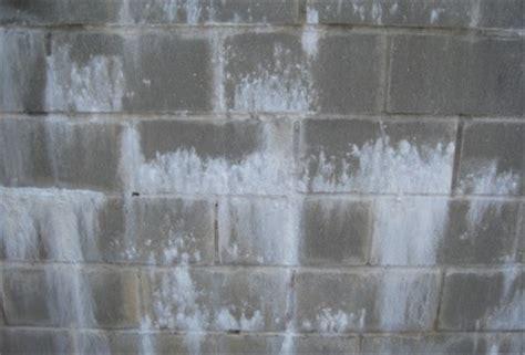 white mold  basementtypes health risks removal