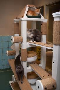 diy cat tower cats enjoy new playroom equipment at the cleveland apl