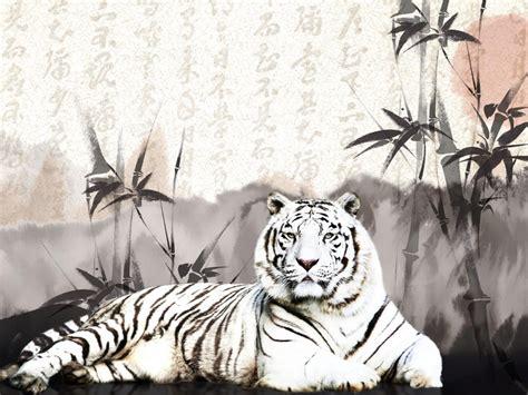 oriental putih harimau hd wallpaper desktop layar lebar