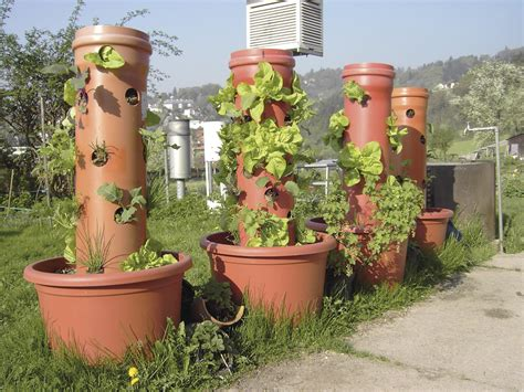 Five Ways To Grow Edibles Vertically
