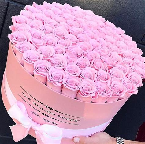 rainbow roses for the million roses slaylebrity