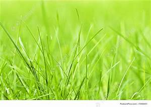Plants: Green Grass Background - Stock Photo I1899451 at ...