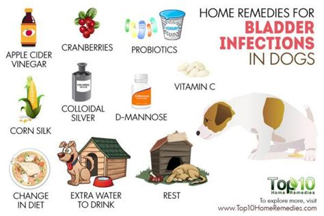 home remedies  bladder infections  dogs top  home