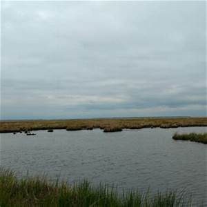 Blackwater National Wildlife Refuge - 62 Photos & 12 ...