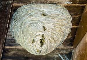 Wer Entfernt Wespennester : villingen schwenningen das wespennest hat es ganz sch n in sich villingen schwenningen ~ Frokenaadalensverden.com Haus und Dekorationen