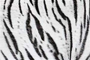 Tiger Stripes by OrangeRoom on DeviantArt