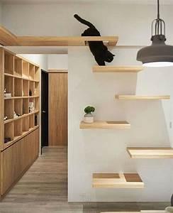 35, Adorable, Cat, House, Pets, Design, Ideas