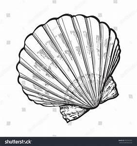 Scallop Sea Shell Sketch Style Vector Stock Vector ...
