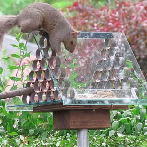 ways  prevent squirrels  reaching birdseed