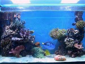 L acquario di rossi alessandro acquarioitalia