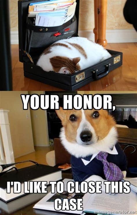 Law Dog Meme - cat and dog lawyer meme guy