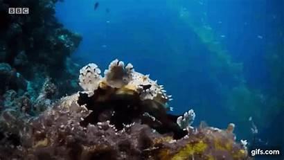 Coral Reef Slug Horned Sea Cucumber Echinodermata