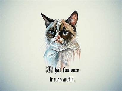 Cat Grumpy Funny Backgrounds Wallpapers Cats Fun