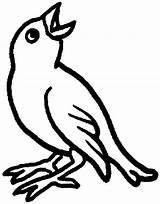 Bird Coloring Pages Bulletin Board Library Boards Preschool Rag Tweeting Bing Quilt Patterns sketch template