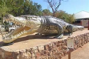 G1 - Foto de crocodilo monstro de 8,6 m morto em 1957 gera ...
