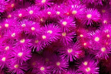 purple flowers wallpaper background  wallpapersafari