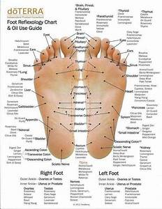 Reflexology Chart Showing Where Your Nervous System Ends
