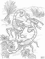 Coloring Scorpion Animals Dangerous Coloringbay sketch template