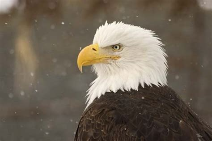 is a bird an omnivore bird