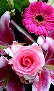 iPhone Wallpaper HD Pink Flower | Best HD Wallpapers ...
