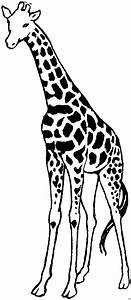 Giraffe, Gross, Ausmalbild, U0026, Malvorlage, Tiere