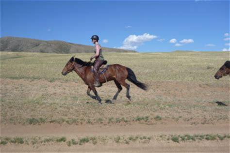 comment monter a cheval comment monter 224 cheval en mongolie conseils aux cavaliers occidentaux pour s adapter aux