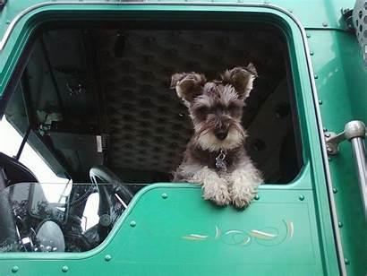 Dog Trucking Pets Drivers Pet Truck Trucker