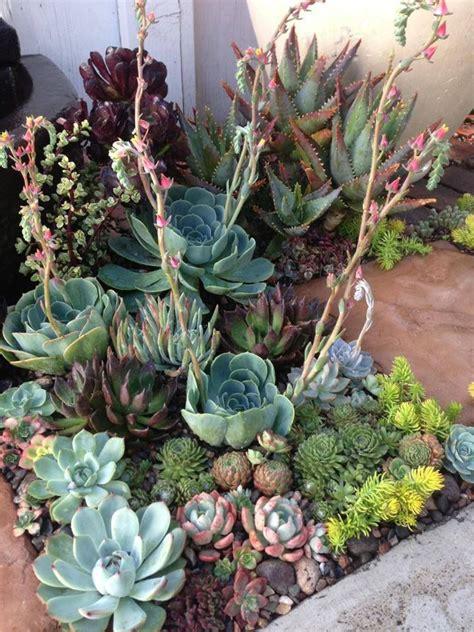 Garden Beautiful Succulents by Beautiful Succulent Planting Jardin Plantas Flores