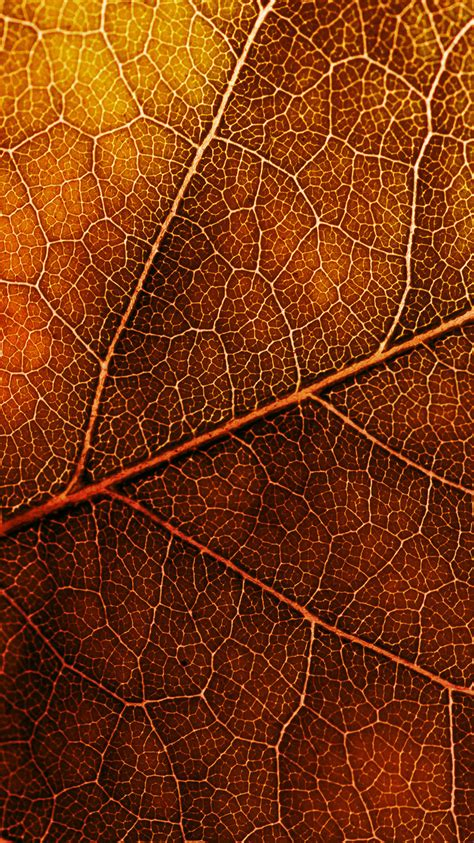 Orange Leaf Wallpaper by Orange Leaf Iphone Wallpaper Hd