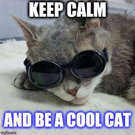 Stay Cool Meme - keep calm and be a cool cat imgflip