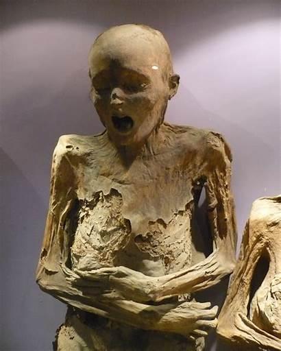 Guanajuato Momia Commons Mexico Mummies Wikimedia Mummy