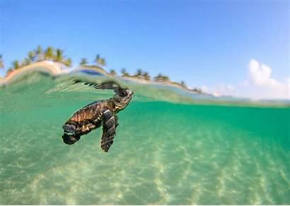 Sea Turtles Wallpapers Turtle Desktop Backgrounds Cave