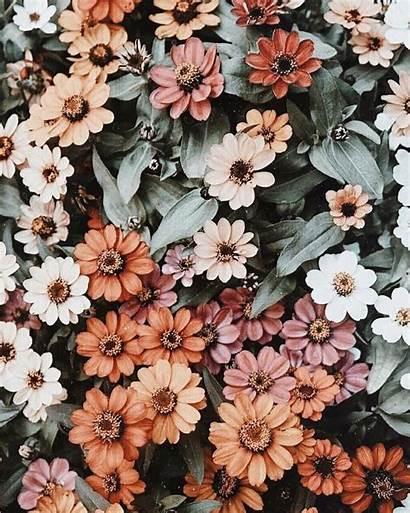 Flower Aesthetic Desktop Flowers Wallpapers Iphone Spring