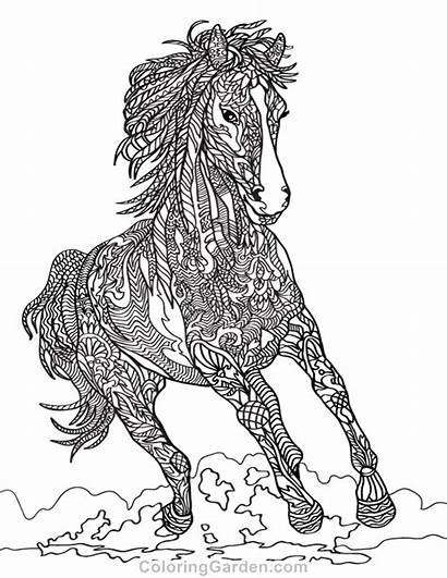 Coloring Horse Pages Printable Animal Adult Adults
