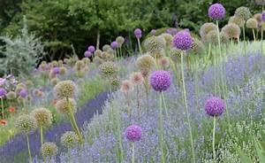 Englischer Garten Pflanzen : die besten 20 englischer garten ideen auf pinterest ~ Articles-book.com Haus und Dekorationen