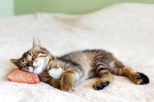 sleeping cat cat pictures animal pictures and