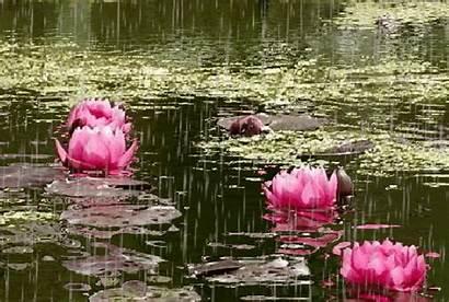 Flores Lluvia Imagenes Bonitas Gifs Flowers Rain