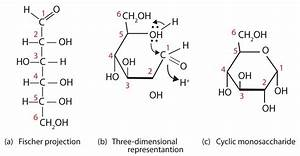 16.4: Cyclic Structures of Monosaccharides - Chemistry ...