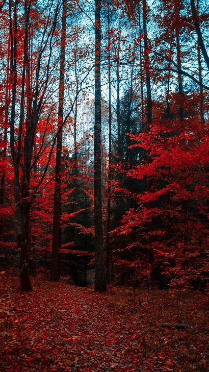 Autumn Trees Forest Foliage Colors Z1 Z3