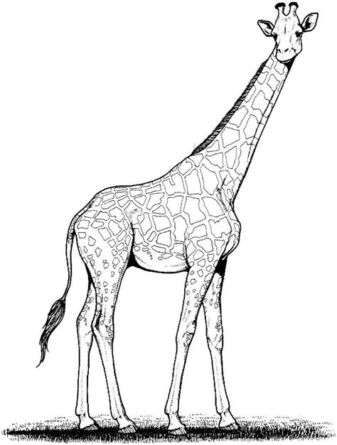 printable giraffe coloring pages  kids giraffe