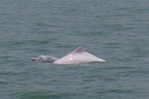 Peek-a-boo! baby Pink Dolphin   Transplanted   Pinterest ...