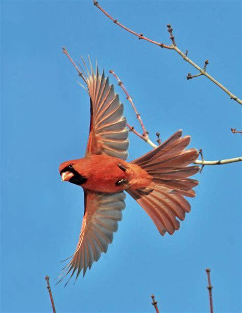 Prevent Birds Flying into Windows - Effective Wildlife ...