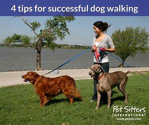 dog walking 4 tips for successfully offering this service With daytime dog sitter