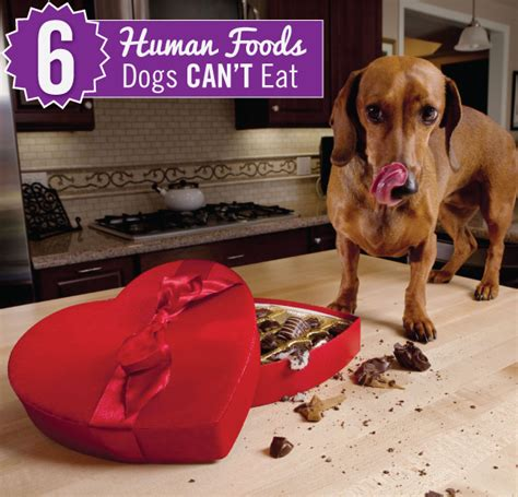 dogs human foods eat dog feed pet