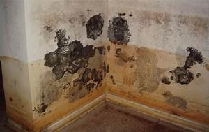 Probleme D Humidite Mur Interieur : des champignons sur le mur un probl me d 39 humidit ~ Melissatoandfro.com Idées de Décoration