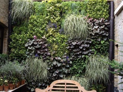 wall plants for shade living wall living wall shade loving plants for vertical planting
