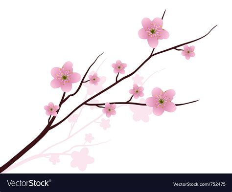 Cherry Blossom Image by Cherry Blossoms Royalty Free Vector Image Vectorstock