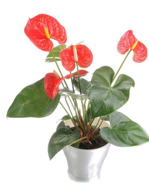 Zimmerpflanzen Bilder Und Namen by Health Benefits Of Houseplants Hgtv